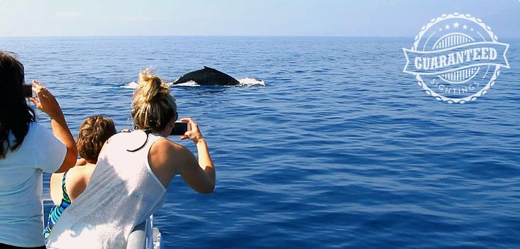 Whale sightings guaranteed