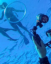 Maui Underwater Video Media Services