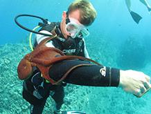 Best Maui Hawaii Underwater Sealife Snorkel Adventure Tour