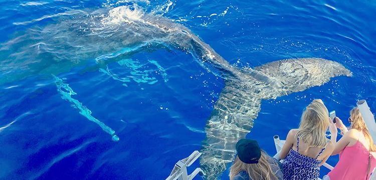 Whale Mugging Behavior