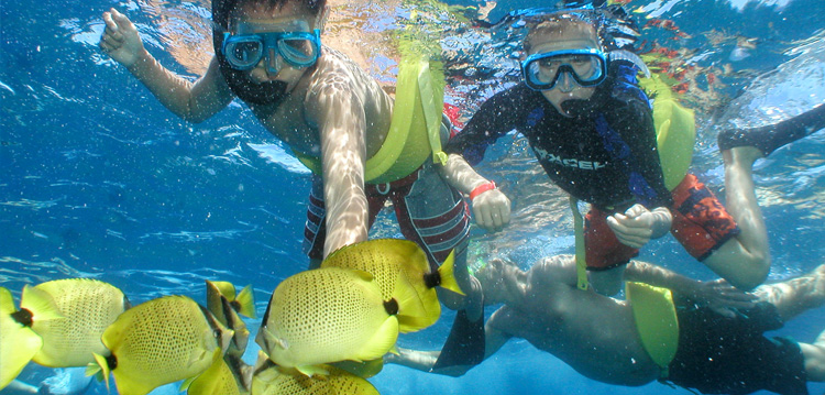 Maui Snorkel Adventure Underwater Sealife Tour