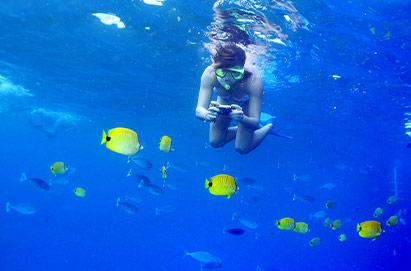 Underwater Sea Life Maui Snorkel Experience