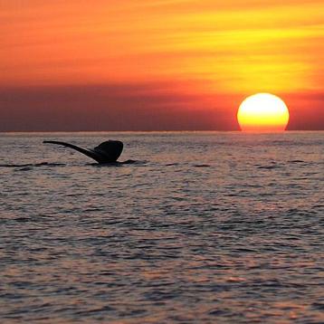Maui Whale Tail Sunset Cruise