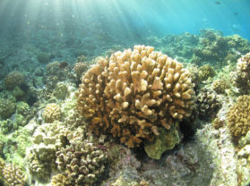 Coral Reef Snorkeling Tour Maui Vacation